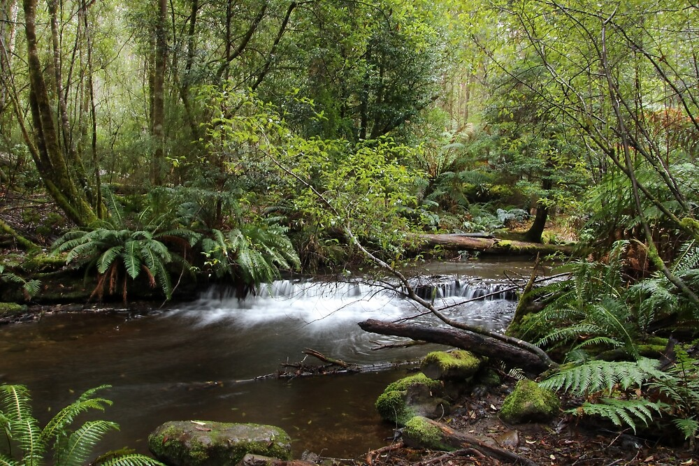 Russell Falls walking track near the river by Gaylene Norton