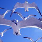 Birds by Steve Stones