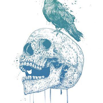 New skull by soltib