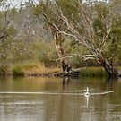 River Murray View 01 by Werner Padarin