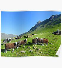The Lake District: Herdwick Sheep & The Langdales. Poster