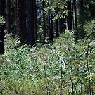 Pine Tree Seedlings........ by DonnaMoore