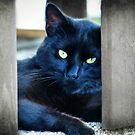 Little Black Kitty by FrankieCat