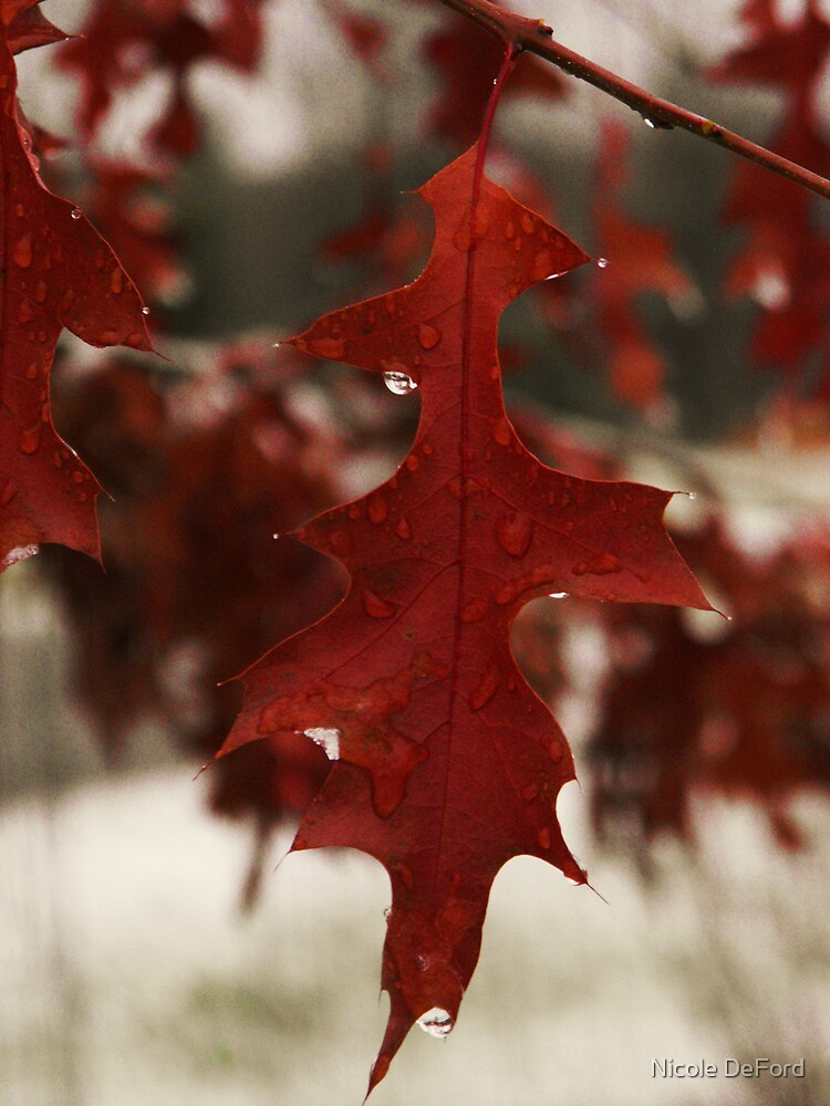 Red Winter  by Nicole DeFord