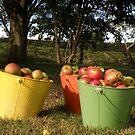 Apples in Buckets by Dean Harkness