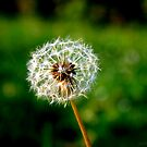 If you had one wish, what would it be? by AJPPhotography