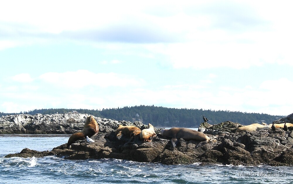 Puget Sound Seals by Maura McMahon