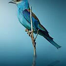 Blue Bird by Cliff Vestergaard