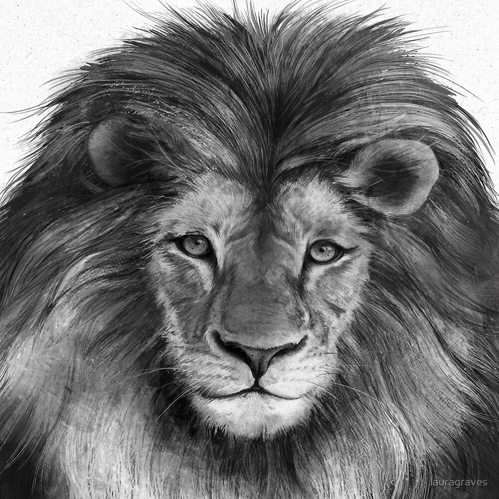 Lion by lauragraves
