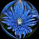 flower in a circle by memaggie
