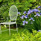 Sit and Enjoy the Beauty   by Monica M. Scanlan