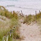 Sandy Path to the Beach by Barbara  Brown