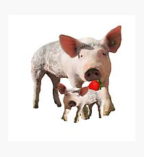 Pig Eating Berry Off of... Another Pig? Photographic Print