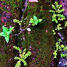 Abstract Moss 3 by Pam Hunt-Bromfield