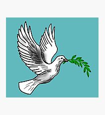 Dove Holding an Olive Branch Photographic Print