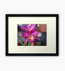 Pink and Yellow Orchids Framed Print