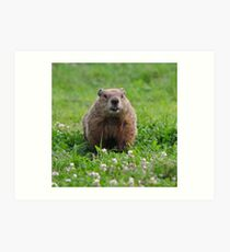 Marmota monax Plate #1 Art Print