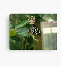 Beautiful Papilio Butterfly Canvas Print