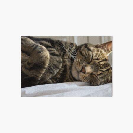 Cute Sleeping Tabby Kitty Art Board Print