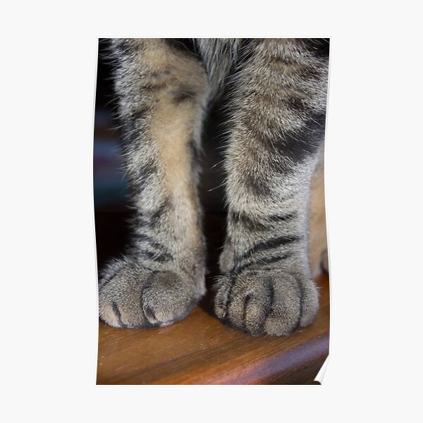 Tabby Pawsome Poster