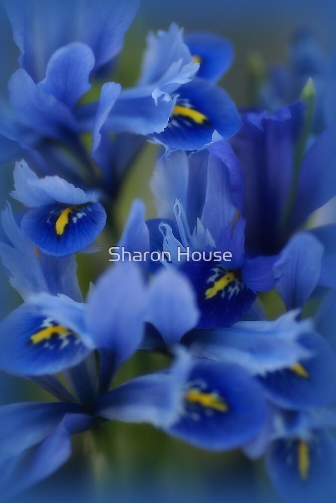 Iris Blue by Sharon House