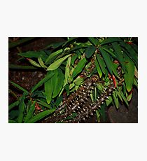 Green and Spikey Photographic Print