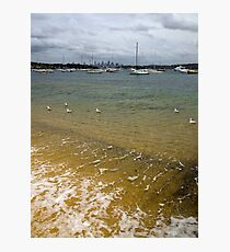 Swimming in the Bay Photographic Print