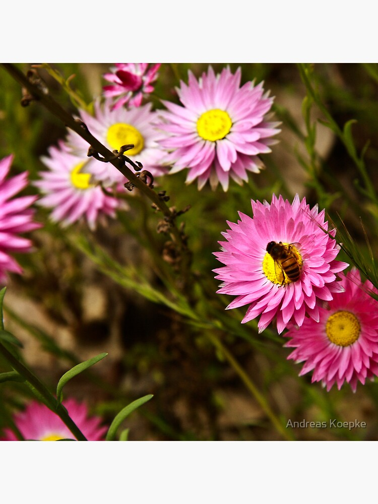 Bee on everlasting by mistered