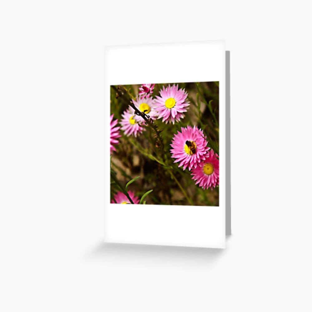 Bee on everlasting Greeting Card