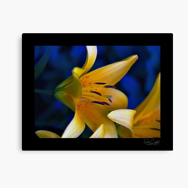 Breakfast With A Yellow Tiger Canvas Print