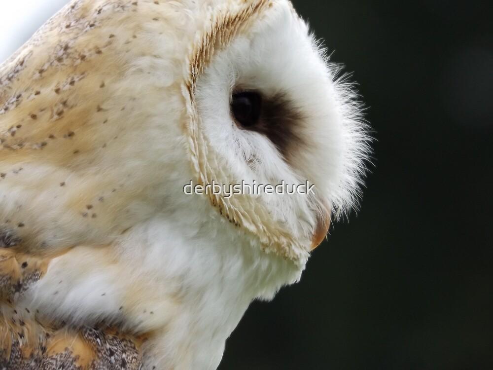 Barn owl side view by derbyshireduck