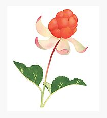 Berry Flower Photographic Print
