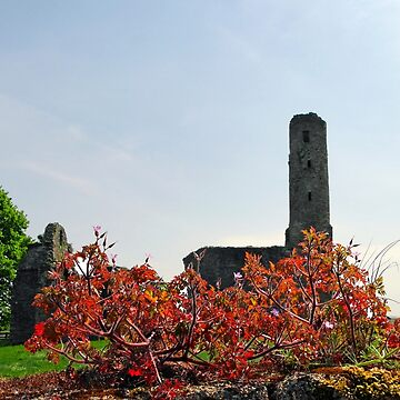 St Mary's Abbey, Ferns, Wexford, Ireland by buttonpresser