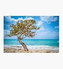 Lone Tree in Negril, Jamaica Photographic Print