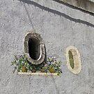 Window garden by Steve plowman