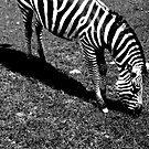 Zebra by Kklove