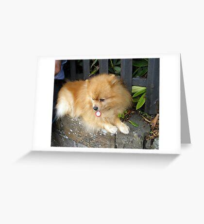 Pretty Pom Greeting Card