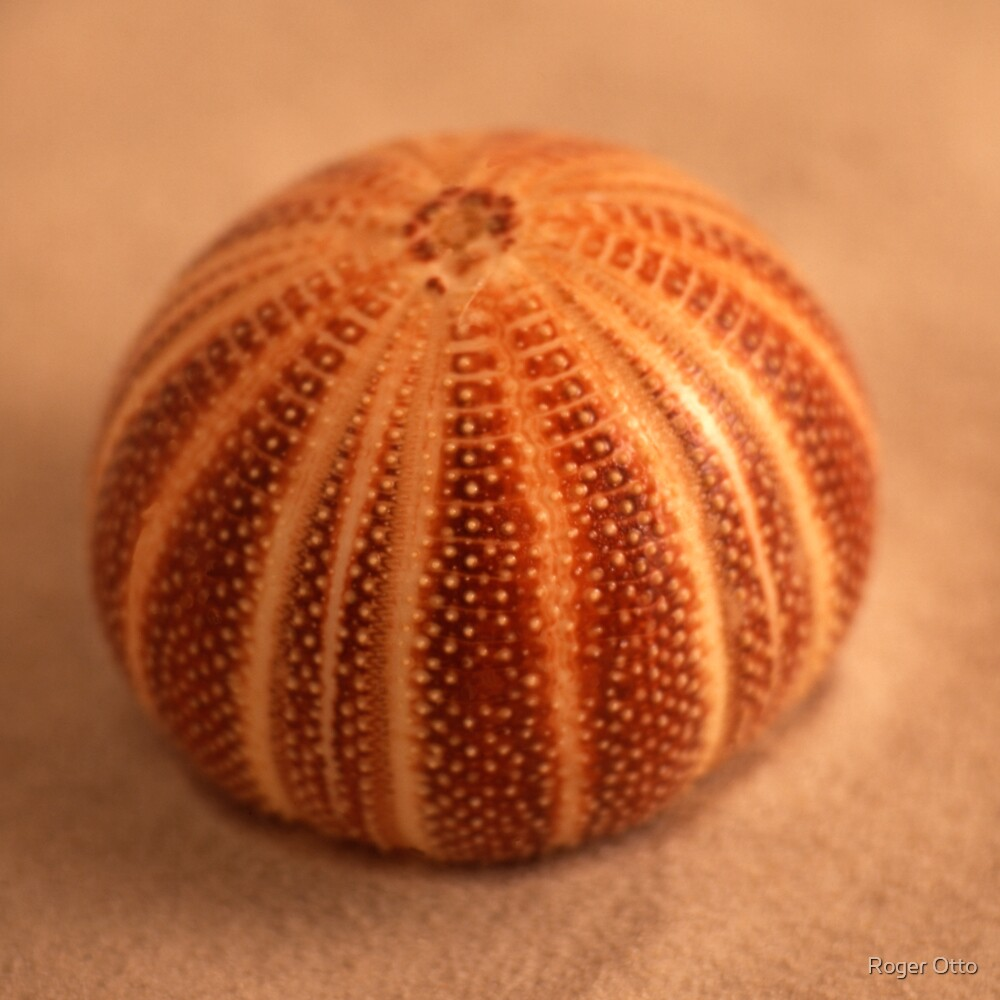 Urchin by Roger Otto