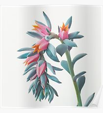 Succulent Cluster Poster