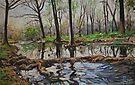 Cypress Creek in Wimberley, Texas by HDPotwin
