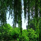 Behind the Willows by solareclips~Julie  Alexander