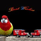 Eastern Rosella  with cars by Bev Pascoe