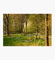 Springtime in New England Photographic Print