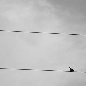 Little Bird by LeonidasBratini