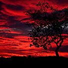 Flame Tree by Varinia   - Globalphotos
