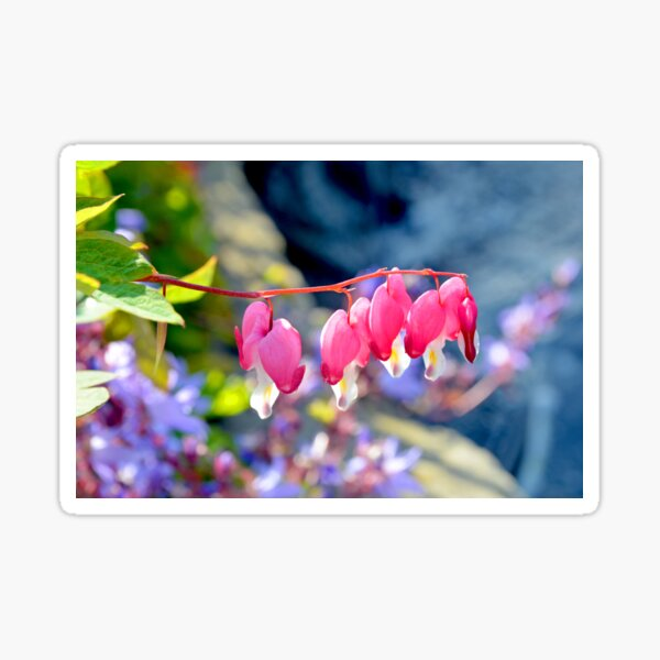 Pink and White Fuchsia Sticker