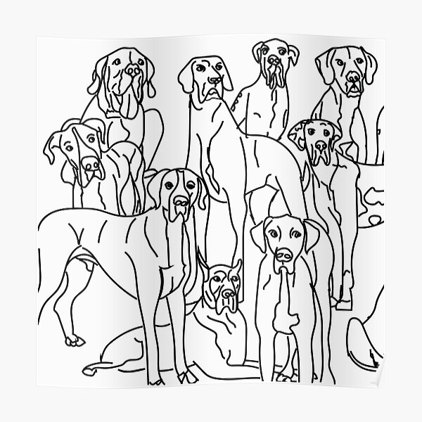 Great Danes. Multiple Dogs. Black and white. Poster
