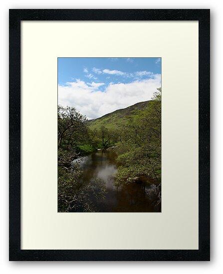 A Scottish Stream by Martina Fagan