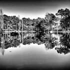 Water Reflections by Nuno Pires
