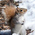 Squirrel by Melissa Fiene